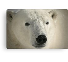 White face looking forward Canvas Print