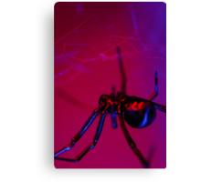 black widow on web Canvas Print