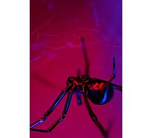 black widow on web Photographic Print