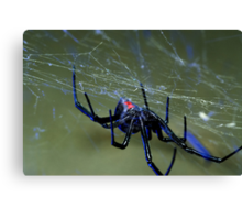 black widow spider hanging on web Canvas Print