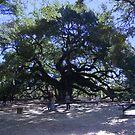 The Angel Oak by barnsis