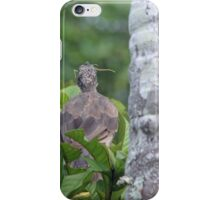 Bird Eating an Insect iPhone Case/Skin