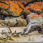 Driftwood and Granite by Bette Devine