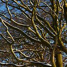 Snow kissed branches by Anne Kingston