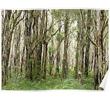 Melaleuca trees, Coombabah Lakelands, Gold Coast Poster