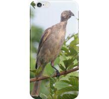 Bird Eating iPhone Case/Skin