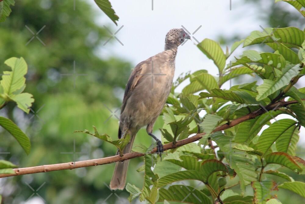 Bird Eating by STHogan