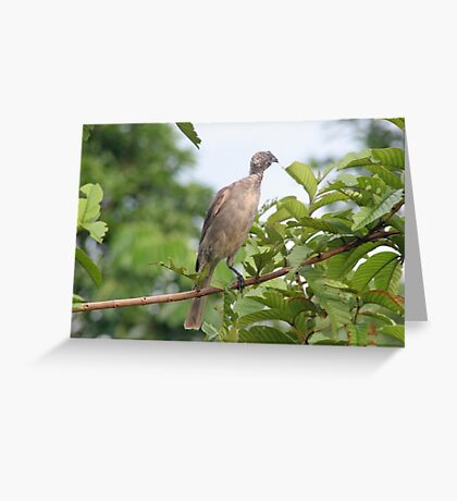 Bird Eating Greeting Card