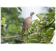 Bird Eating Poster