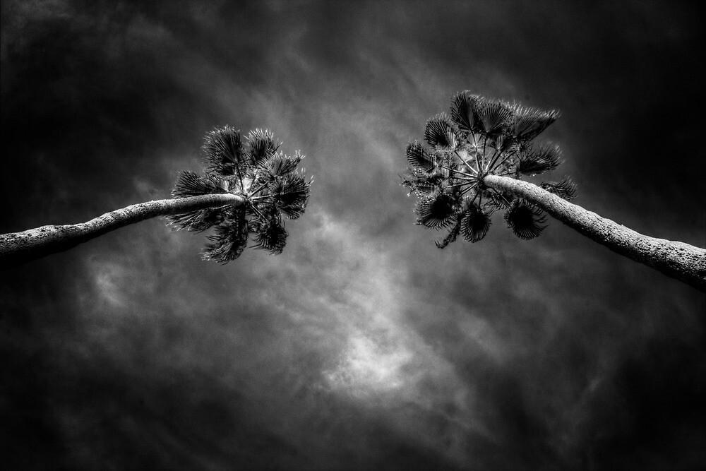 Twin Palms by Bob Larson