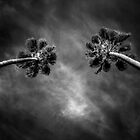 Twin Palms by Bob Larson