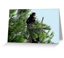 Black Cockatoo Eating a Pine Cone! Greeting Card
