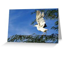 Black-crowned Night Heron ~ Stretch Greeting Card