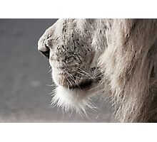Whiskers Lion Photograph Photographic Print