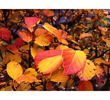Amazingly Bright Fall Colors Photographic Print