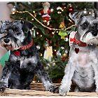 Christmas with Casey & Sammy by cherylwelch