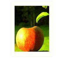 Apple in the Sun Art Print