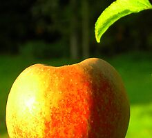 Apple in the Sun by TCL-Cologne