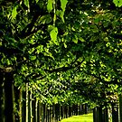 Sunny Green by TCL-Cologne