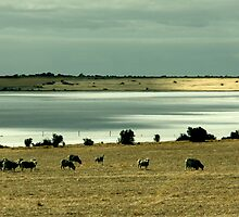 Cloud Shadows over Lake Fowler, South Australia. by pablosvista2