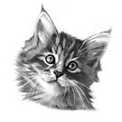 Maine Coon kitten G114 by schukinart