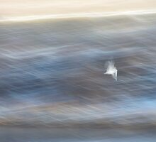 Seagull in a Rush by Iani