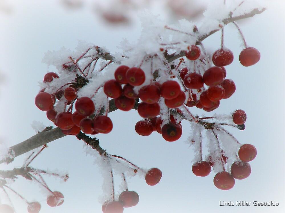 Winter Berries by Linda Miller Gesualdo