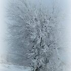 Frosted Tree by Linda Miller Gesualdo