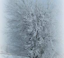 Frosted Tree by Linda Miller Gesualdo