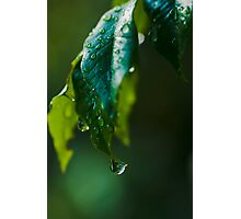 Natural freshness Photographic Print