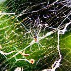 Web full -  but nothing to eat by john  Lenagan