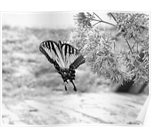 butterfly. Poster