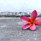 Pink frangipani by fourthangel