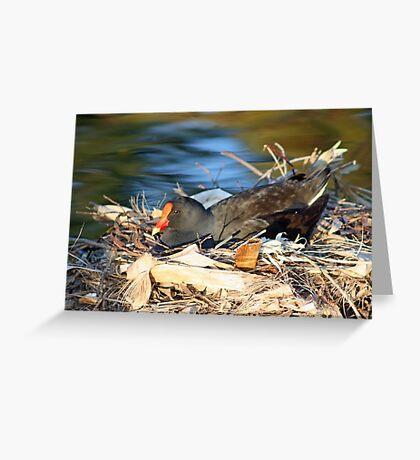 Swamp Hen on Nest Greeting Card
