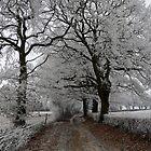 Frosty oak tree lane by photontrappist