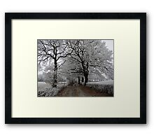 Frosty oak tree lane Framed Print