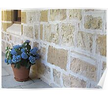 Blue hydrangea and limestone wall Poster