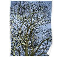 Through the Tree Skywards Poster