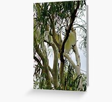 Cockatoo Flying In Tree Greeting Card