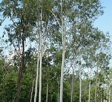 Trees Near Where the Cows Were by STHogan