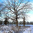 Winter Oak by JGetsinger