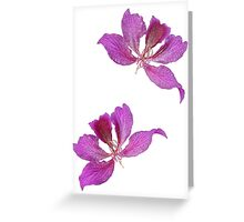 Bauhinia Greeting Card