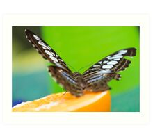 butterffly on fruit Art Print