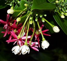 Flowers on a tropical vine by ♥⊱ B. Randi Bailey