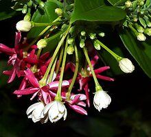 Flowers on a tropical vine by ♥⊱ B. Randi Bailey
