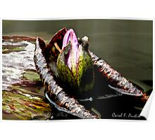 Water Lily Finding Closure Poster