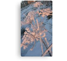 Haw Frost on Fennel, portrait. Canvas Print