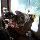 Bebee Loves the Sunshine by EleanorRoosevel