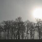 Foggy morning in Stoke Park by Irina Chuckowree