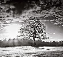 Mists of sunrise snow by clickinhistory